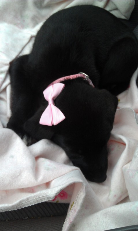 I even have bows for my puppy. TSM.