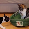 Cat Steals Puppy Bed