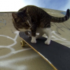 If You Think Cats Are Boring, You Haven't Seen This Skateboarding Cat