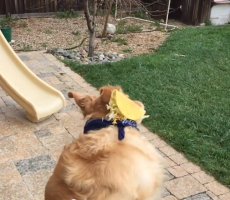 This Dog Just Can't Seem To Catch Food And It Gets Even Better In Slomo