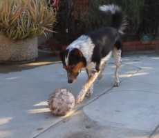 Watch This Incredibly Smart Dog Make Every Other Dog Look Bad
