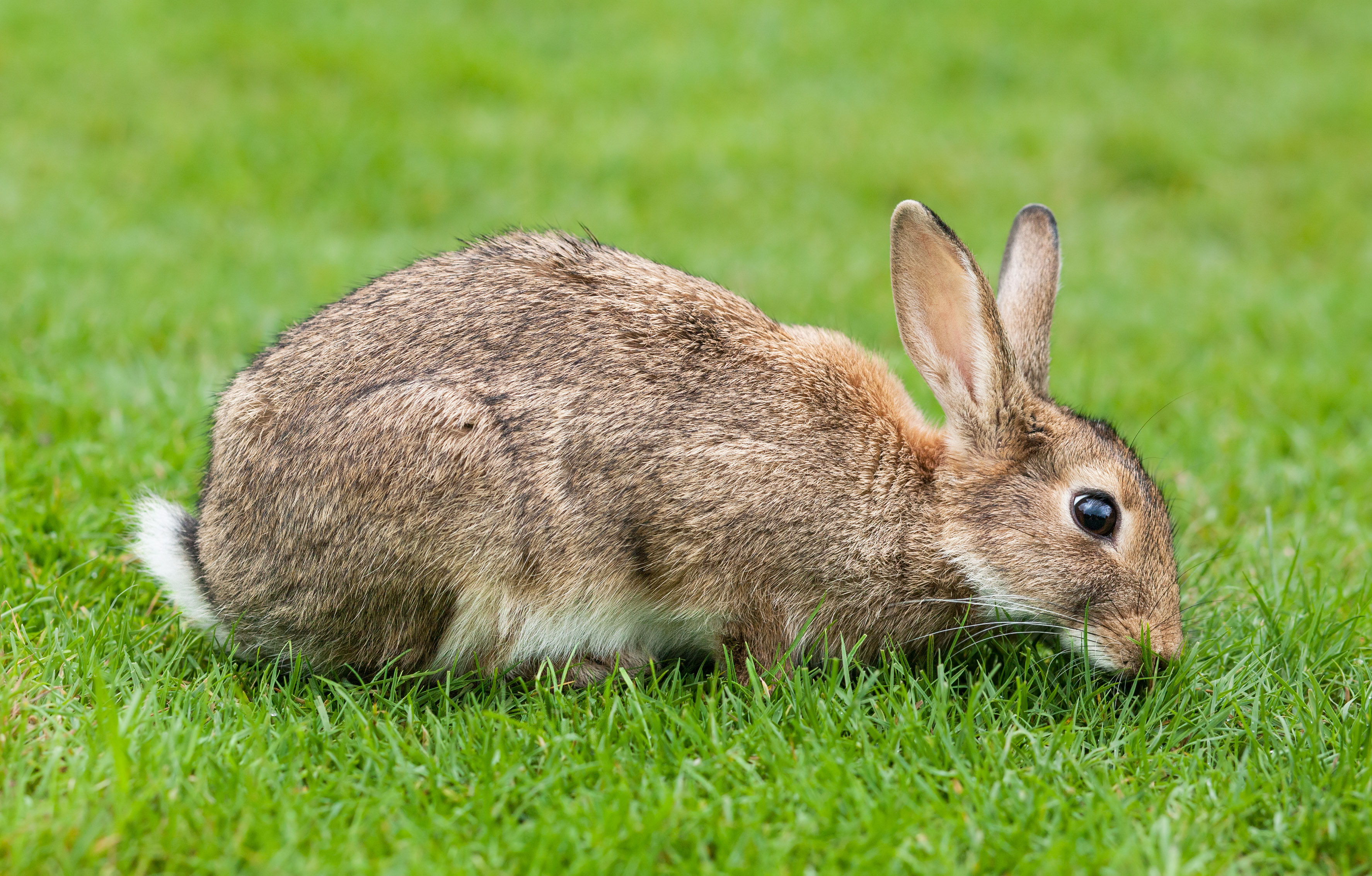Utah Considers Passing Medical Marijuana, Is Warned Of Statewide Stoned Rabbits
