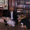John Legend Sings And Hosts This Private Wedding -- For Dogs