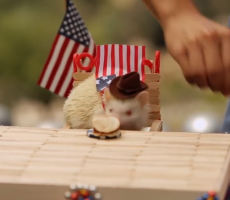 Here's Some Hamsters Having A Better Fourth Of July Than You