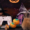 You've Got To See Out This Miniature Hamster Halloween