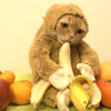 Here's A Cat Dressed In A Monkey Suit Eating A Banana