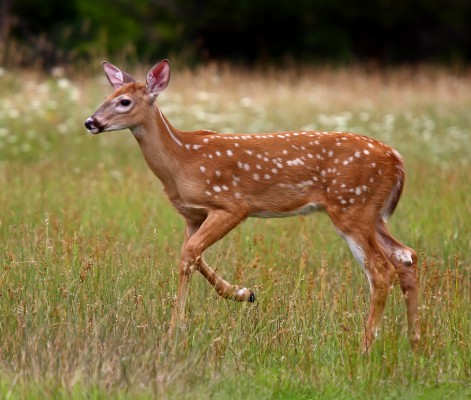 9 beauty standards you will never live up to unless you are an actual deer