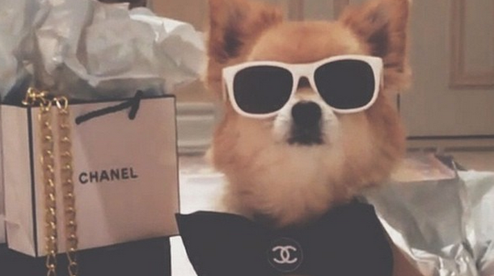 Rich Dogs Of IG