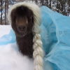 "Here's A Goat Dressed As Elsa From ""Frozen"""