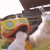 The University Of Oregon Duck Mascot Stars In The Best Recruitment Video EVER