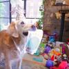 9/11 dog's birthday