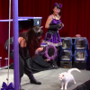 Crazy Cat Ladies Attempt To Train Cats And It's So Bad It's Good