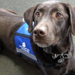 Chi O At Ohio State Sues School Over Service Dog