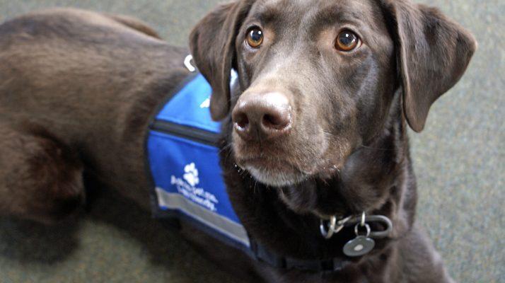 Chi O At Ohio State Sues School Over Service Dog